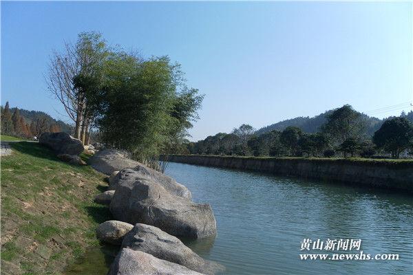 """石川村:""""苗木+茶园""""发展模式助力美丽乡村建设"""