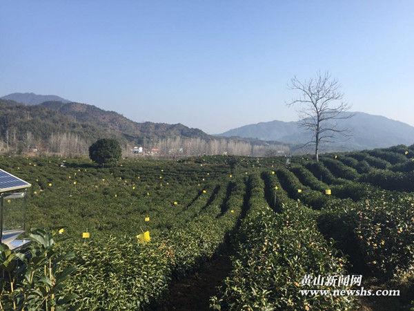 祁门县西塘村:茶园飘香环境美 产业发展带致富