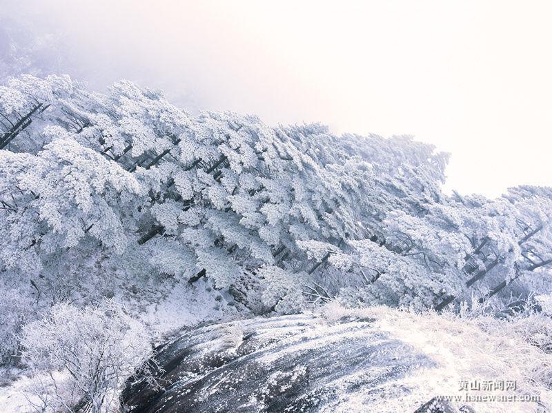 【组图】黄山风景区大雪持续,雪景绝美