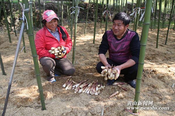 黄山区:竹笋增收笑开颜