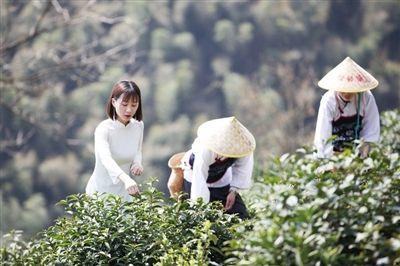 休寧:農業綠色發展迸發新活力