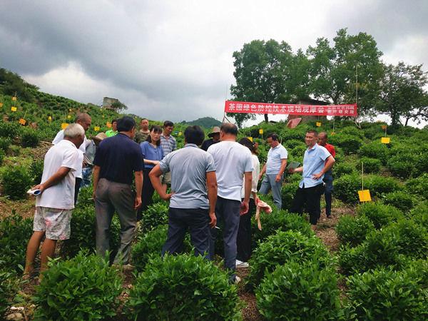 祁门县茶园病虫害绿色防控技术送到乡村地头