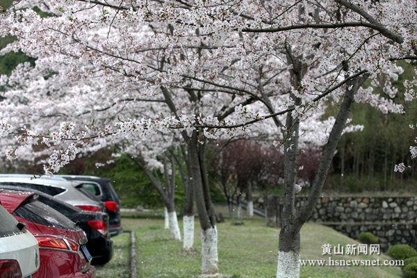 奇墅湖畔花盛开 春色旖旎风光好